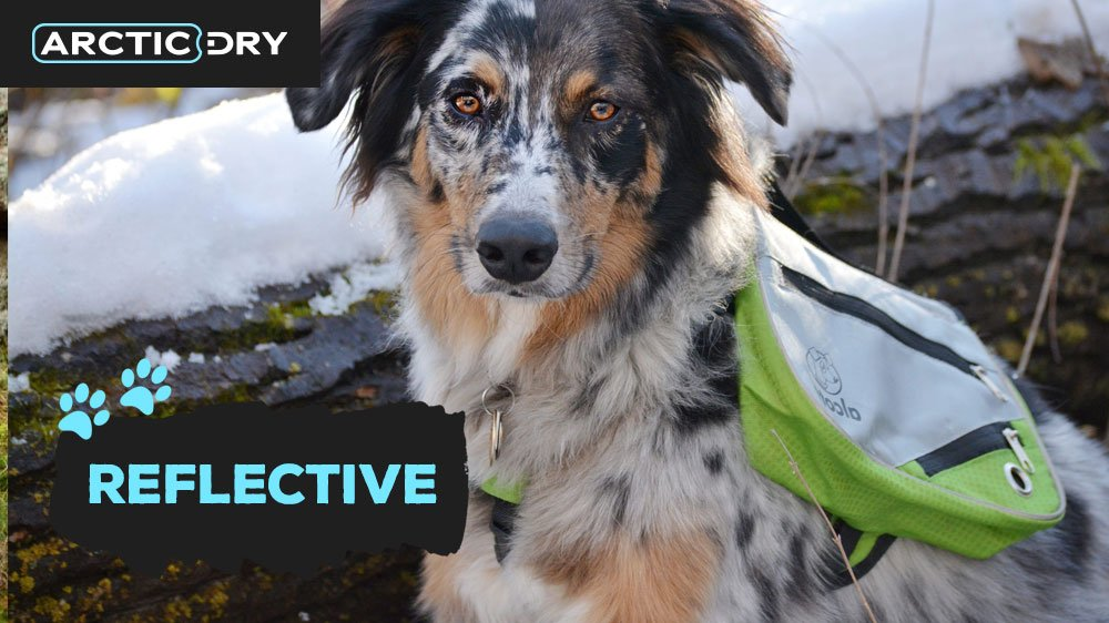 best-hiking-backpacks-for-dogs-reflective