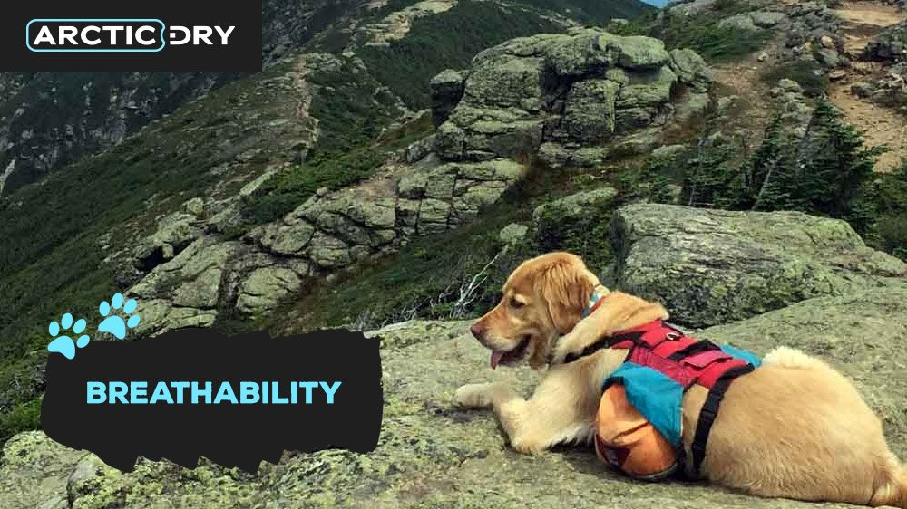 best-hiking-backpack-for-your-dog-breathability